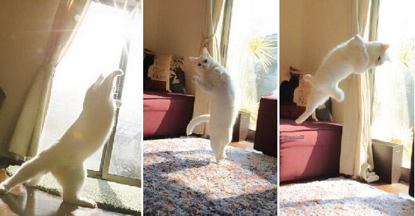 20 ภาพที่พิสูจน์แล้วว่าแมวชอบความอบอุ่น จากแสงแดดมากเหนือสิ่งอื่นใด