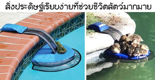 นักชีววิทยาสร้างสิ่งประดิษฐ์สุดคูล ที่ช่วยให้สัตว์ตัวน้อยรอดชีวิตจากการจมน้ำ