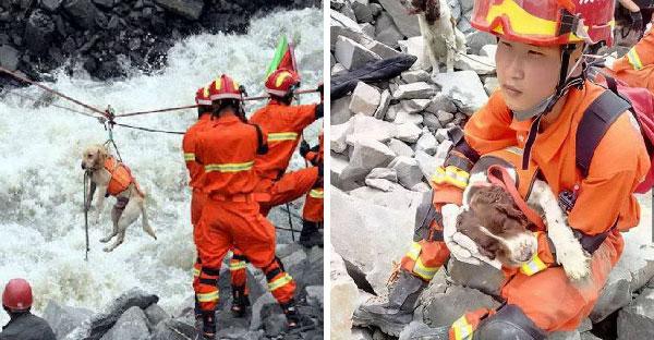 หนุ่มน้อยวัย 11 ออกตามหาคุณปู่และช่วยเหลือสุนัขกู้ภัยในเหตุการณ์แผ่นดินไหวใหญ่ในจีน