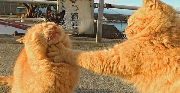 13 แมวเหมียวเฟี๊ยวฟ้าวมะพร้าวแก้ว ที่จัดจ้านไม่แพ้ใครในย่านนี้