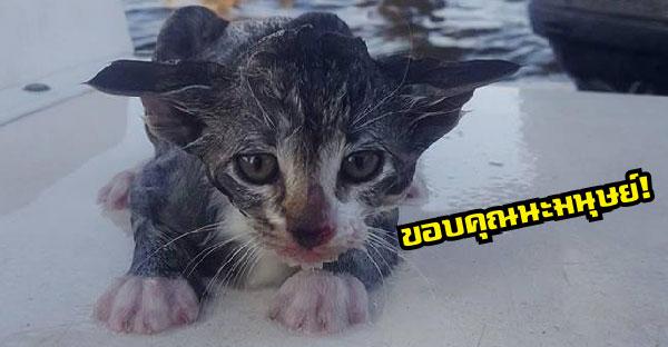 ลูกแมวถูกโยนลงทะเลว่ายน้ำสุดชีวิต เคราะห์ดีได้นักสำรวจสะพานช่วยได้ทันเวลา