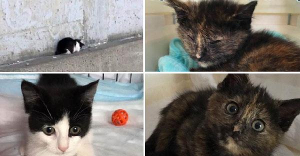 ทาสแมวรีบไปช่วยแมวป่วย แต่เจอลูกแมวบาดเจ็บข้างถนน จึงหิ้วไปรักษาพร้อมกันเลย