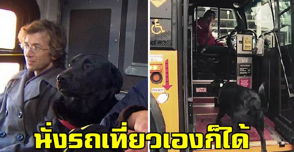 สุนัขแสนรู้ขึ้นรถบัสไปสวนสาธารณะทุกวัน จนกลายเป็นขวัญใจคนทั้งเมือง