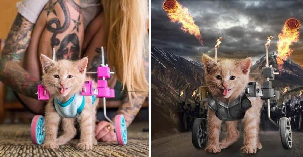 ลูกแมวน้อยพิการขาได้วีลแชร์สุดแจ่ม ชาวเน็ตแห่ยินดีด้วยการตัดต่อซะฮากระจาย