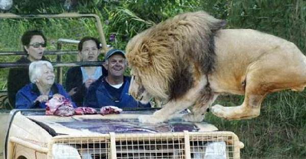 30 ภาพที่ยืนยันว่าถึงอยู่บนรถ ก็ไม่ควรไว้ใจสัตว์โลกแม้แต่นิดเดียว