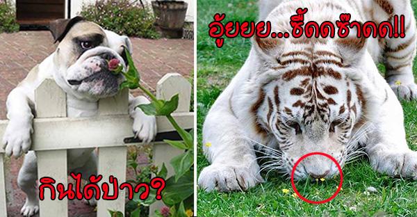 ส่อง 15 ภาพสัตว์โลกหน้าขนที่กำลังสดชื่นกับกลิ่นหอมของดอกไม้..อย่างน่าร็อคเลย (ᗒᗨᗕ)