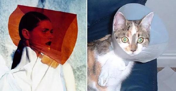16 ภาพแฟชั่นของมนุษย์ที่อาจจะมี Reference จากแมวเหล่านี้ก็เป็นได้
