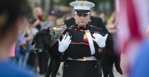 สุนัขร่วมรบกับนายทหารนานหลายปี ก่อนป่วยมะเร็งกระดูก เขาจึงจัดพิธีอำลาให้สุดยิ่งใหญ่!!