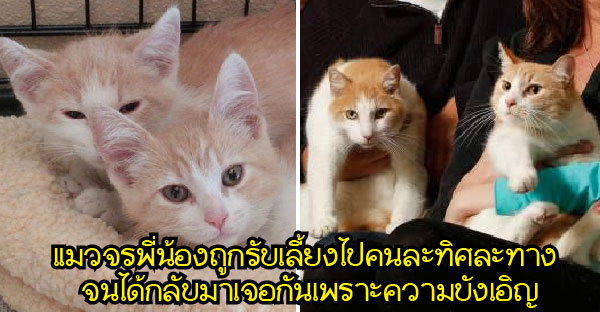 โชคชะตานำพาคู่รักบังเอิญเจอกัน บังเอิญเลี้ยงแมวเหมือนกัน บังเอิญแมวเป็นพี่น้องกันอีก