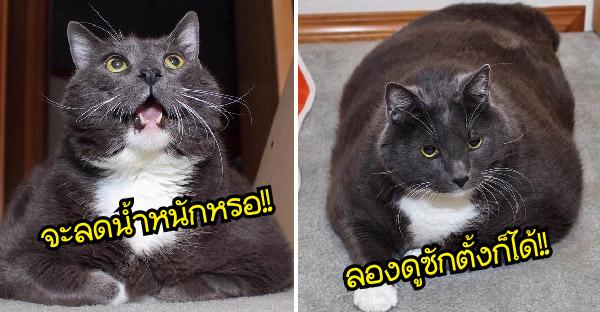 แมวอ้วนหนักถึง 15 กิโลกรัม ถึงน่ารักแต่ก็อันตราย เจ้าของจึงจับลดน้ำหนักซะเพียวเลย