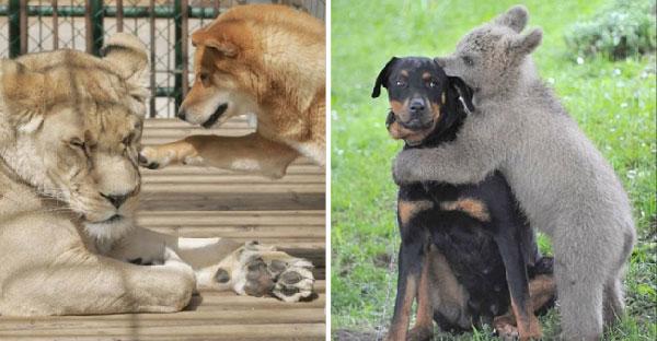 13 เรื่องราวระหว่างเจ้าตูบกับมิตรภาพสุดน่ารักที่มีต่อสัตว์โลกชนิดอื่น (^ᴥ^)