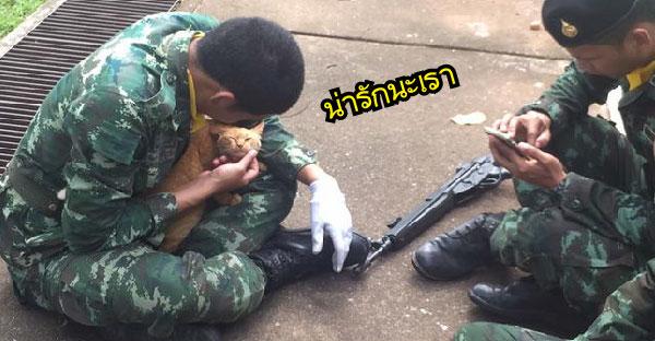 หนึ่งภาพล้านความหมาย !!  มิตรภาพที่ยากจะอธิบายของนายทหารกับแมวส้ม