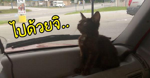 เมื่อลูกแมวจรจัดกระโดดขึ้นรถคนแปลกหน้า ชีวิตของมันก็เปลี่ยนไป
