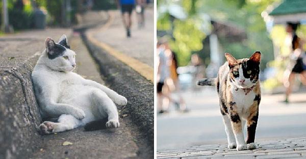 """แมวสวนลุมทั้ง """"น่ารัก"""" """"น่ากอด"""" จนตอนนี้กลายมาเป็นสติ๊กเกอร์ไลน์แล้วนะ"""