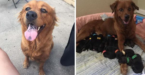 หญิงสาวช่วยเหลือสุนัขจรจัดจากศูนย์พักพิงสัตว์ ก่อนคลอดลูกออกมามากถึง 18 ตัว