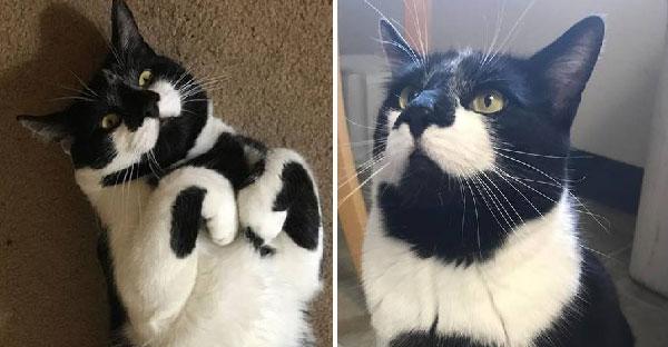 แมวลายทักซิโด้ถูกรับเลี้ยงและส่งกลับหลายครั้งเพราะคึกเกินเหตุ แต่แล้วก็พบรักแท้เข้าจนได้