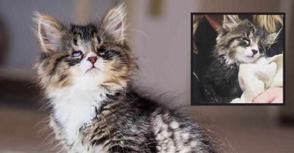 ลูกแมวตาบอดหัวใจนักสู้ ที่ฉายแววน่ารักจนใครเห็นต่างก็หลงรัก