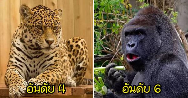 10 อันดับสัตว์ที่มีพลังการกัดและบดขยี้เหยื่อมากที่สุดในโลก