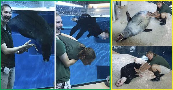 เจ้าหน้าที่ดูแลสวนสัตว์ ใช้เวลาว่างในการเลียนแบบสัตว์ เป็นงานอดิเรกที่ครีเอทสุดๆ