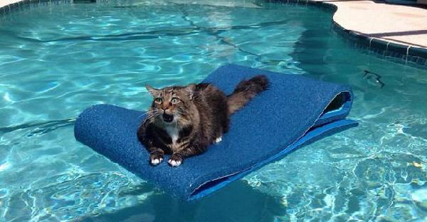 อ่อนหัดแล้วคิดจะครองโลกหรอ? ชมภาพแมวสุดเฟลที่จะขำหรือสงสารดีละเนี่ย