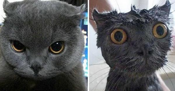 25 ภาพเปรียบเทียบก่อน-หลังอาบน้ำของสัตว์เลี้ยง ที่ช่างแตกต่างกันเสียเหลือเกิน