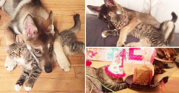 เจ้าของให้ลูกสุนัขเลือกว่าจะเลี้ยงแมวตัวไหนในศูนย์พักพิงสัตว์ และผลลัพธ์ก็ดีเกินคาด
