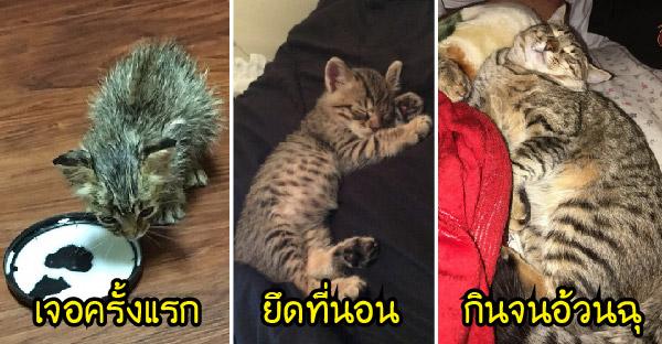 สาวใจดีรับลูกแมวจรจัดผอมโซมาเลี้ยง ก่อนจะกินไม่หยุดฉุดไม่อยู่ และยึดบ้านไปครองแบบเนียนๆ