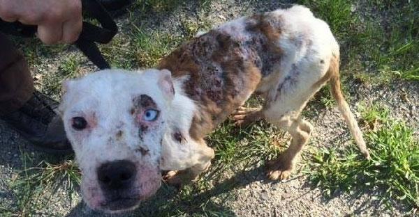 สุนัขโชคร้ายถูกทิ้งจรจัดนานร่วมปี พอคนไปช่วยดีใจสุดขีด กระดิกหางจนเลือดออก