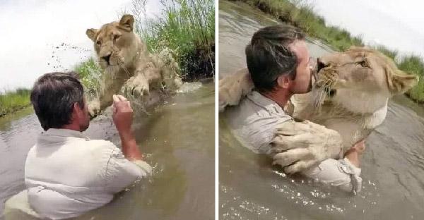สิงโตกระโดดกอดชายหนุ่มที่เคยช่วยชีวิต และเลี้ยงดูตั้งแต่ยังแบเบาะ
