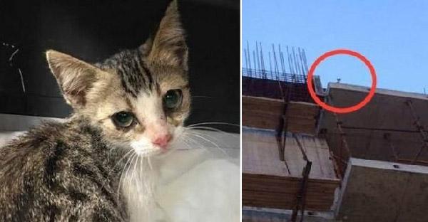ลูกแมวตัวน้อยร้องจนเสียงแหบขอความช่วยเหลือบนดาดฟ้าตึกนาน 3 วัน