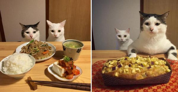 ปฏิกิริยาของแมวเหมียว เมื่อเจออาหารเย็นที่แตกต่างกัน จะเป็นยังไงกันบ้าง