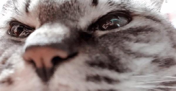 15 ภาพแมวเหมียวสุดดราม่า ที่เหมือนกำลังเล่นละครหลอกทาสอย่างเราให้ตายใจ