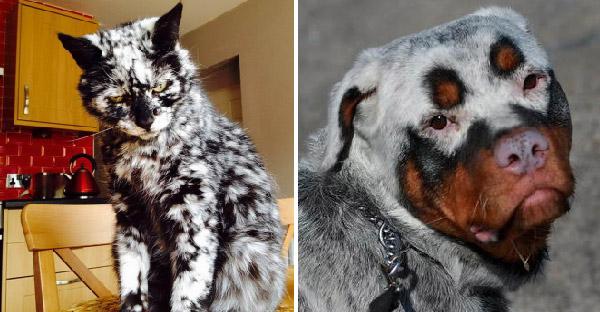 15 หมา-แมวที่ดูสวยงามแปลกประหลาด แท้จริงแล้วมันเกิดขึ้นเพราะสาเหตุนี้