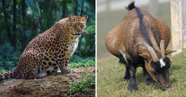 17 ภาพสัตว์โลกหาดูยากที่กำลังตั้งครรภ์
