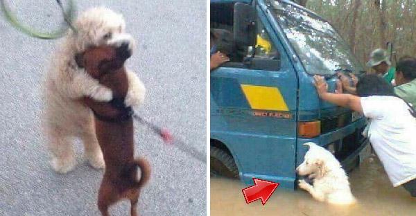 20 ภาพความน่ารักของน้องหมา ที่จะทำให้หลงรักพวกมันมากขึ้นอย่างแน่นอน