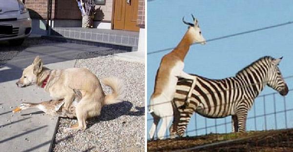 15 ภาพสุดฮาของสัตว์โลกกับการฟีทเจอริ่งข้ามสายพันธุ์แบบคาดไม่ถึง!!