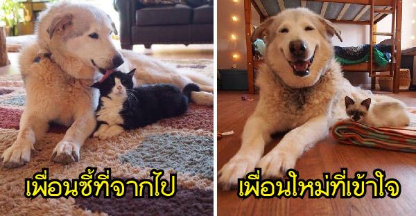 พี่หมาสูญเสียเพื่อนแมวที่สนิทที่สุด ก่อนได้แก๊งลูกแมวช่วยสร้างรอยยิ้มให้อีกครั้ง