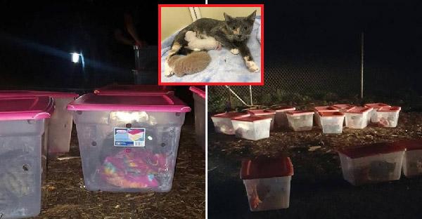 เจ้าหน้าที่กู้ภัยผงะหลังเจอกล่องปริศนา 14 ใบ เปิดออกมาพบแม่และลูกแมวเพียบ