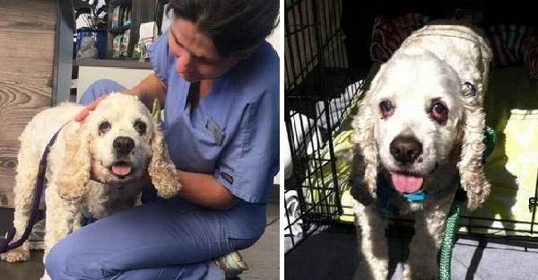 สุนัขแก่อายุ 20 ปี ถูกเจ้าของทิ้งอย่างไร้เยื่อใย เพราะเขาบอกว่ามันแก่เกินไป