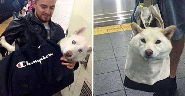 เมื่อกฎห้ามพาหมาขึ้นรถไฟใต้ดินยกเว้นใส่กระเป๋าได้ ทำให้เกิดเป็นภาพน่ารักๆกันทั่วโซเชียล