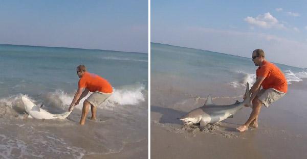 หนุ่มสุดกล้า! ลากปลาฉลามขึ้นฝั่งด้วยมือเปล่า เพราะต้องการช่วยชีวิตของมันเอาไว้