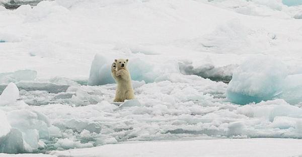 10 ภาพสัตว์โลกและธรรมชาติสุดมหัศจรรย์ การันตีความงดงามจาก National Geographic
