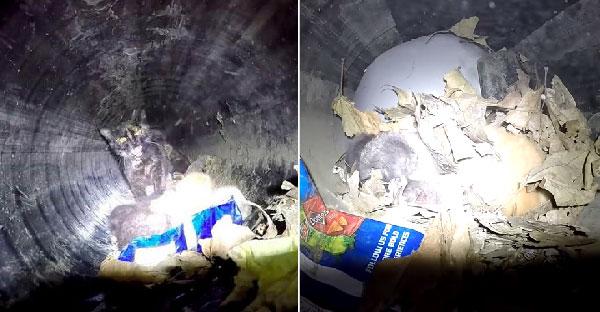 พลเมืองดีพบแมวดำในท่อระบายน้ำ พอสังเกตดีๆพบว่ามันมีลูกตัวน้อยติดอยู่ด้วย