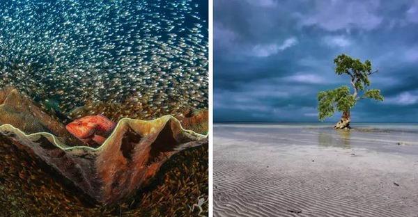 15 ภาพธรรมชาติกับสัตว์โลกแห่งท้องทะเล ที่ซ่อนความหมายอันลึกซึ้ง