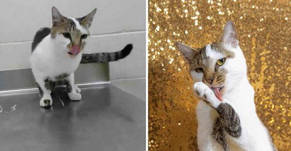 14 ภาพสัตว์ไร้บ้านที่ได้บ้านใหม่ เพราะว่าภาพถ่ายโปรโมทดูดีขึึ้นแบบผิดหูผิดตา