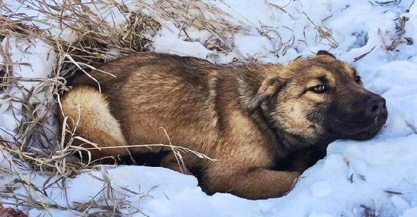 ลูกสุนัขโดนรถชนนอนจมกองหิมะนานกว่า 12 ชั่วโมง กว่ากู้ภัยสัตว์จะหาตัวเจอ