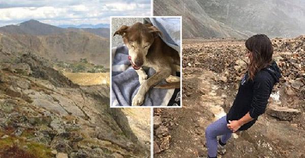 นักปีนได้ยินเสียงสุนัขบนภูเขา ใช้เวลานานกว่า 6 สัปดาห์ออกตามหาจนเจอ