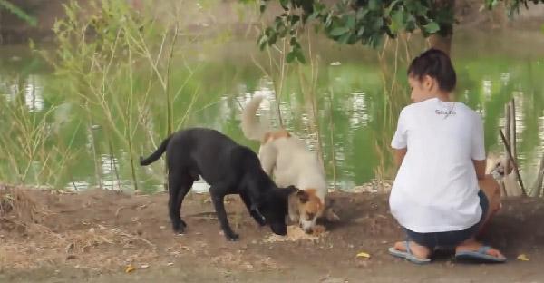 เมื่อเขาและเธอเริ่มให้อาหารหมาจรรอบๆหมู่บ้าน สิ่งที่ได้จากการให้ในครั้งนี้ คืออะไร?