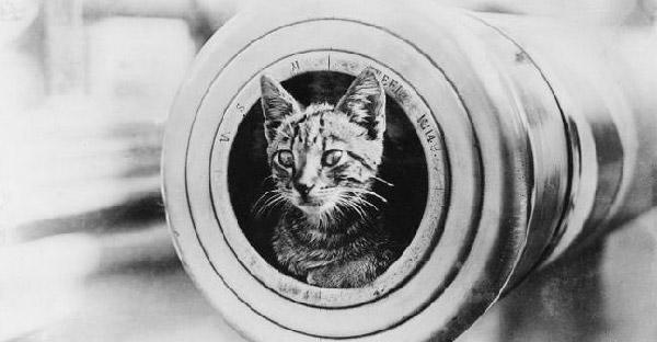แมวคิดจะครองโลก!! 16 ภาพยืนยันว่า แมว คือผู้อยู่เบื้องหลังสงครามโลกครั้งที่ 1