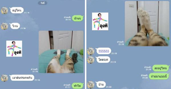 เมื่อแมวเล่นไลน์เป็น แล้วเช็คว่าแฟนอยู่บ้านไหม จึงกลายเป็นแชทลับสุดฮาขึ้น